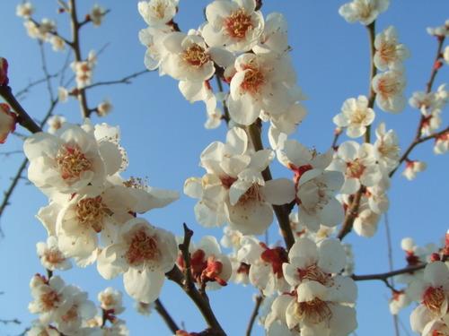 雪月花(せつげつか)